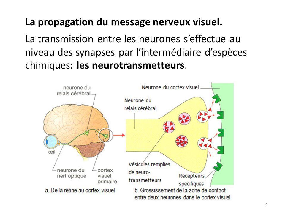 4 La propagation du message nerveux visuel. La transmission entre les neurones seffectue au niveau des synapses par lintermédiaire despèces chimiques:
