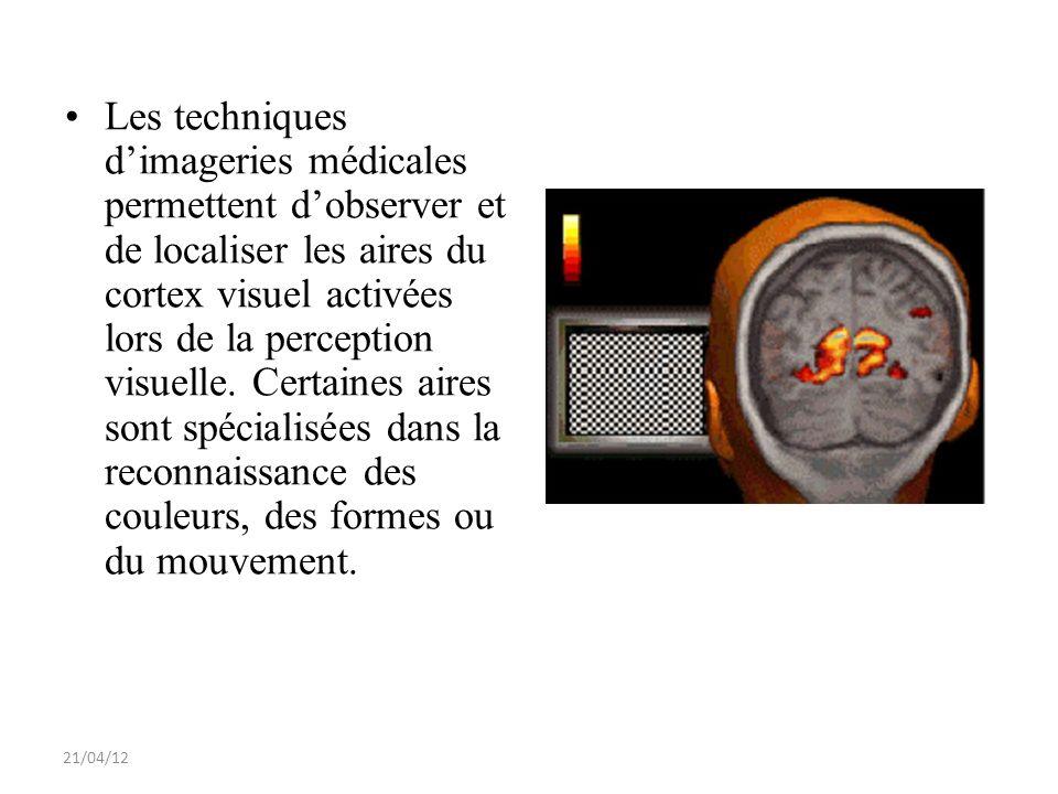 21/04/12 Les techniques dimageries médicales permettent dobserver et de localiser les aires du cortex visuel activées lors de la perception visuelle.