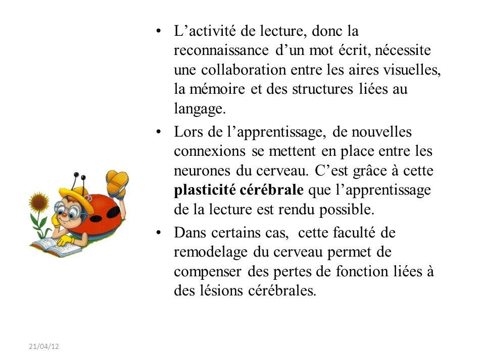 21/04/12 Lactivité de lecture, donc la reconnaissance dun mot écrit, nécessite une collaboration entre les aires visuelles, la mémoire et des structur