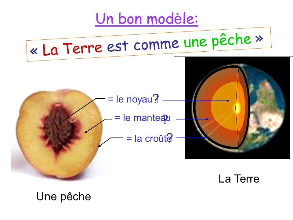 Le noyau La chair La peau Un bon mod è le: = le manteau = le noyau .