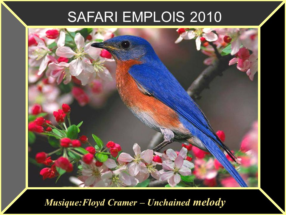 SAFARI EMPLOIS 2010 Musique:Floyd Cramer – Unchained melody