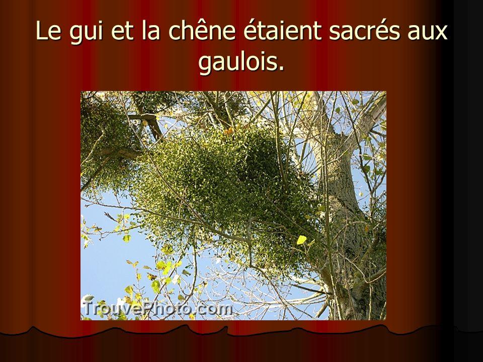 Le gui et la chêne étaient sacrés aux gaulois.