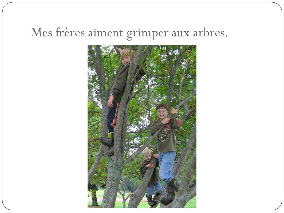 Mes frères aiment grimper aux arbres.