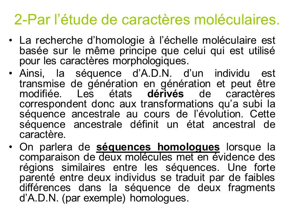 2-Par létude de caractères moléculaires. La recherche dhomologie à léchelle moléculaire est basée sur le même principe que celui qui est utilisé pour