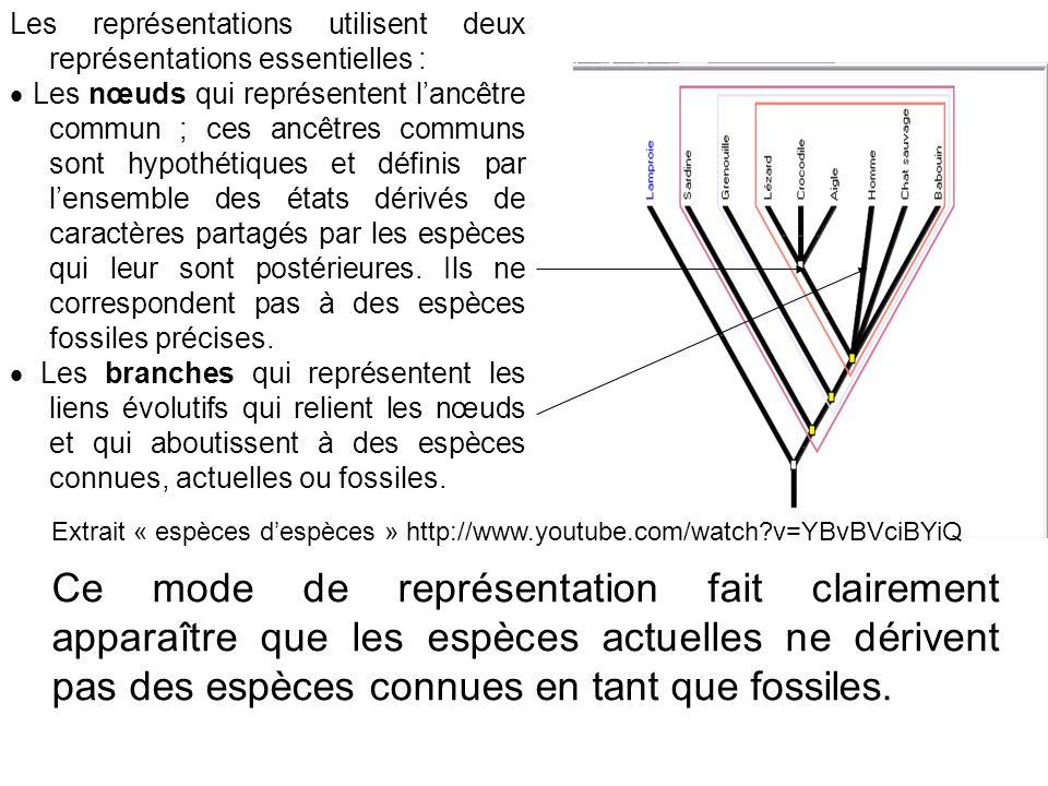 Les représentations utilisent deux représentations essentielles : Les nœuds qui représentent lancêtre commun ; ces ancêtres communs sont hypothétiques