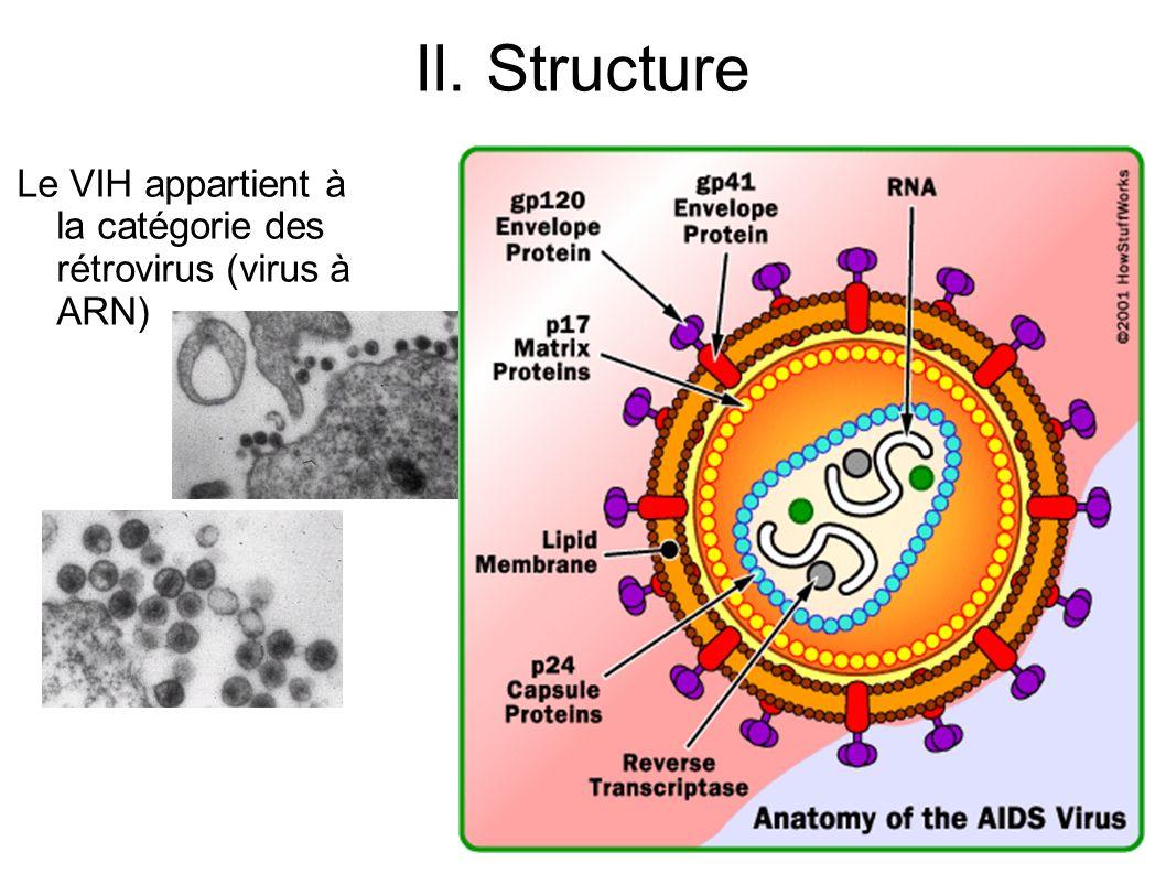- Apparaissent en même temps dans le sang du sujet contaminé des lymphocytes T cytotoxiques spécifiques dirigés contre les cellules infectées par le VIH.