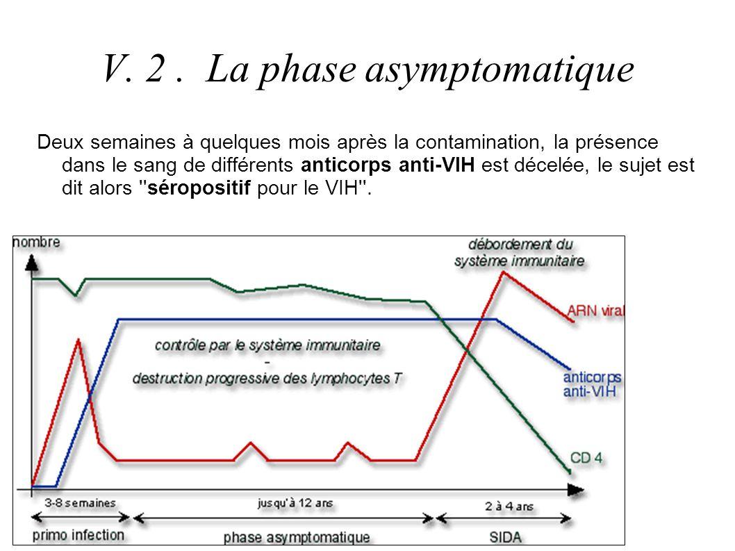 ETAPE 1 : La sélection clonale Virus VIH Clone de LB 2 Clone de LB 2 LB 1LB 2LB 3 Le LB 2 est sélectionné puis se divise par mitoses successives.