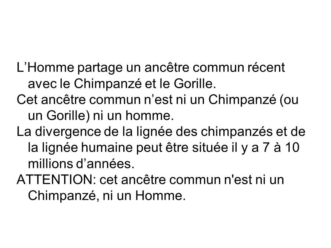 LHomme partage un ancêtre commun récent avec le Chimpanzé et le Gorille. Cet ancêtre commun nest ni un Chimpanzé (ou un Gorille) ni un homme. La diver