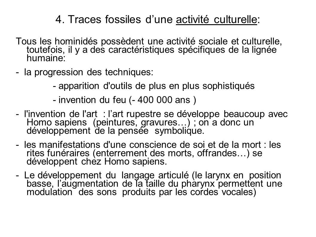 4. Traces fossiles dune activité culturelle: Tous les hominidés possèdent une activité sociale et culturelle, toutefois, il y a des caractéristiques s