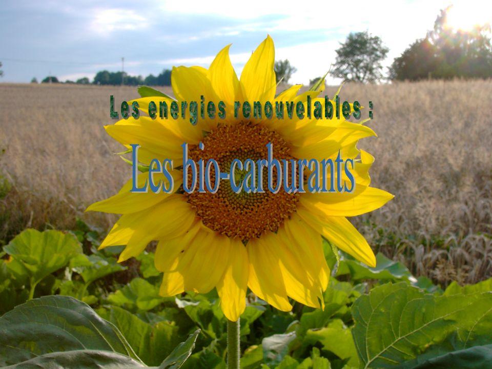 Les biocarburants sont issus de plantes cultivées : betteraves, colza, ou tournesol.
