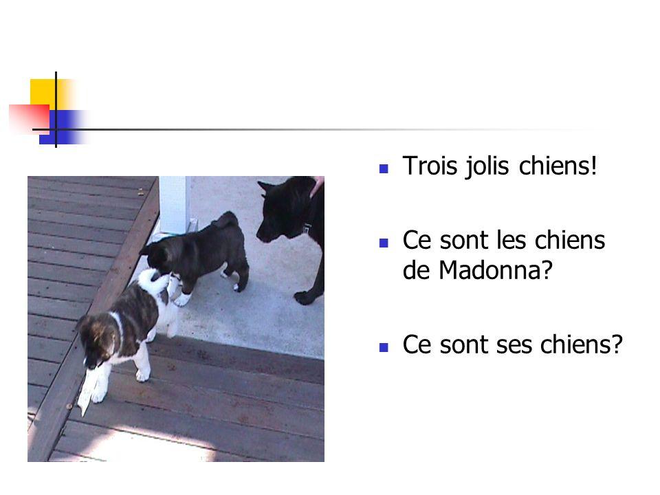 Trois jolis chiens! Ce sont les chiens de Madonna? Ce sont ses chiens?