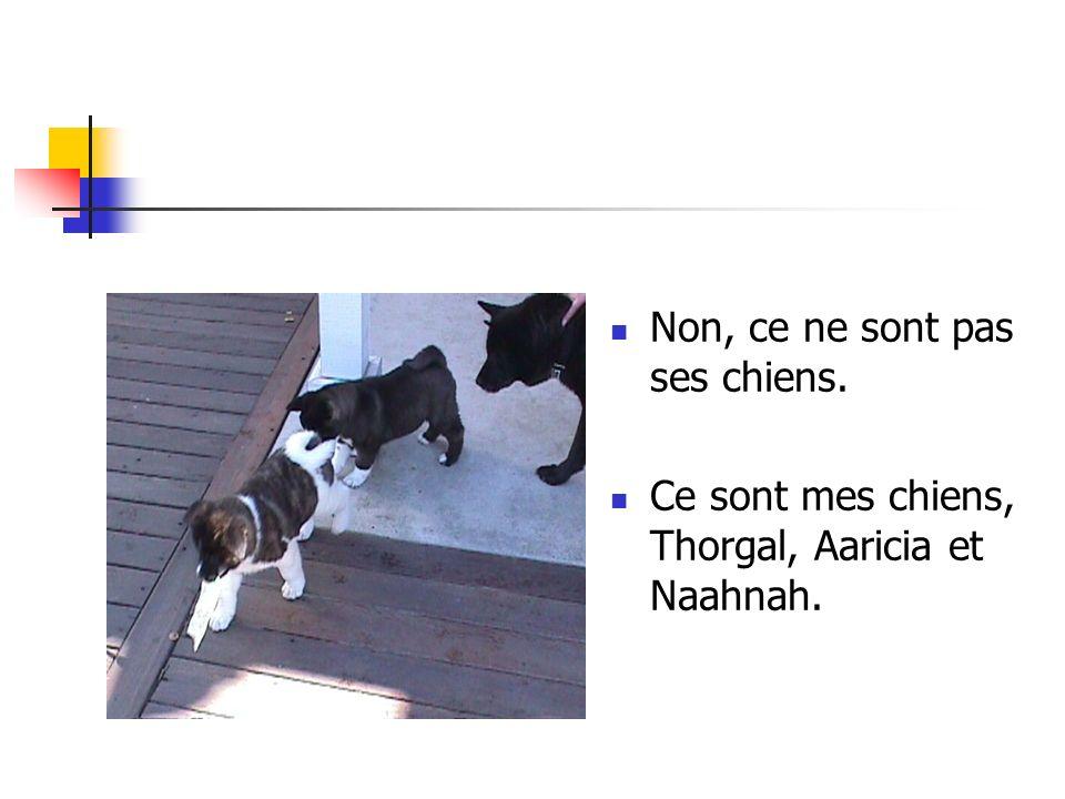Non, ce ne sont pas ses chiens. Ce sont mes chiens, Thorgal, Aaricia et Naahnah.