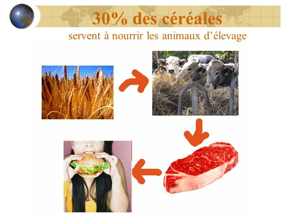 30% des céréales servent à nourrir les animaux délevage