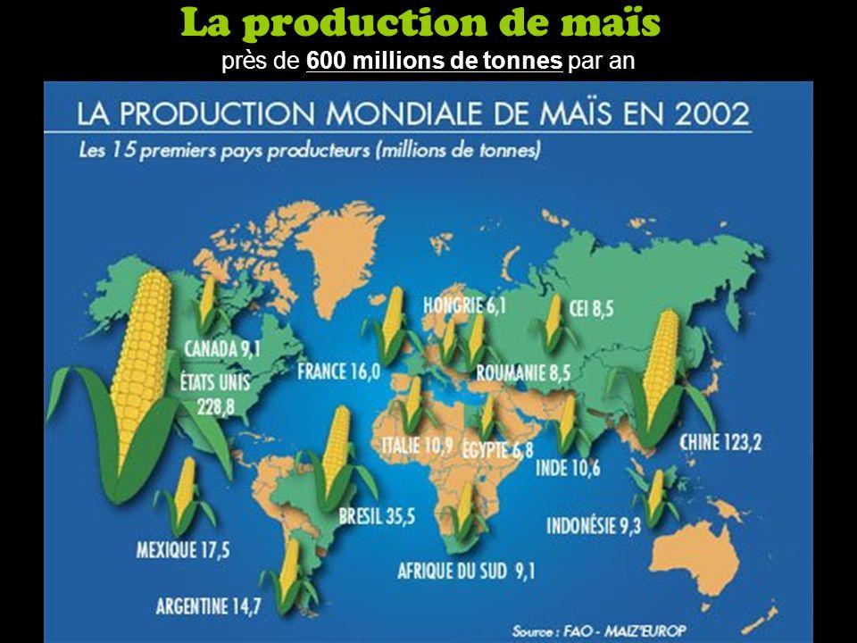 La production de maïs pr è s de 600 millions de tonnes par an