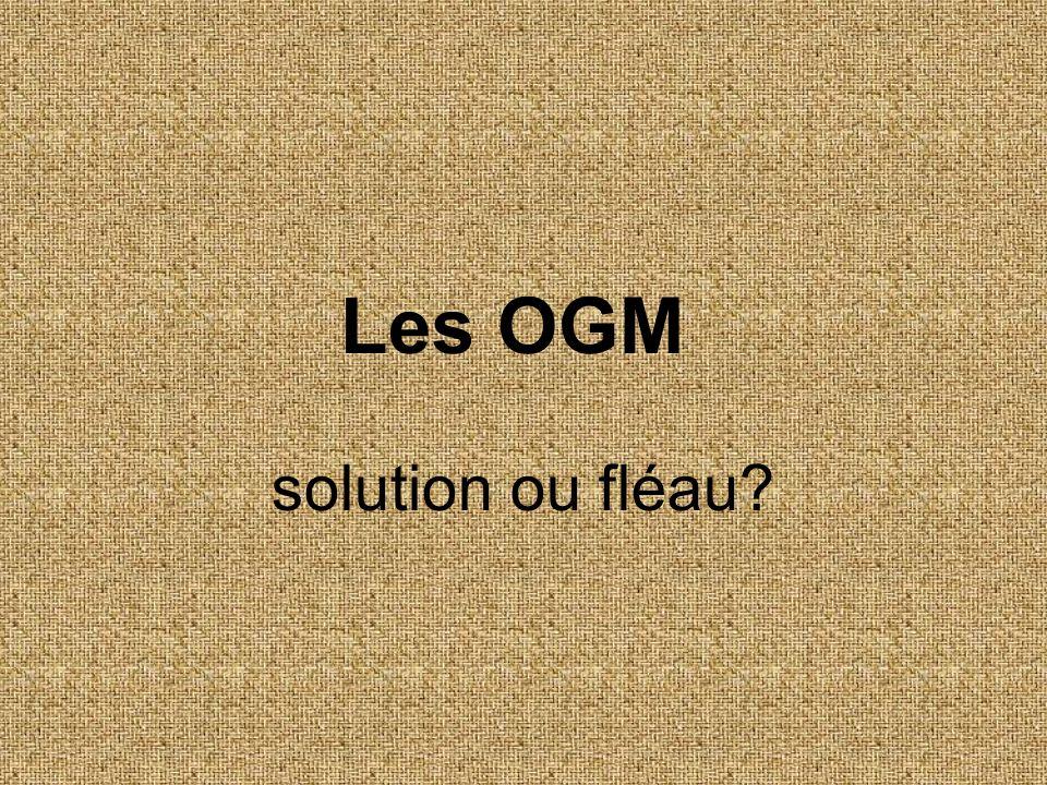 Les OGM solution ou fléau?