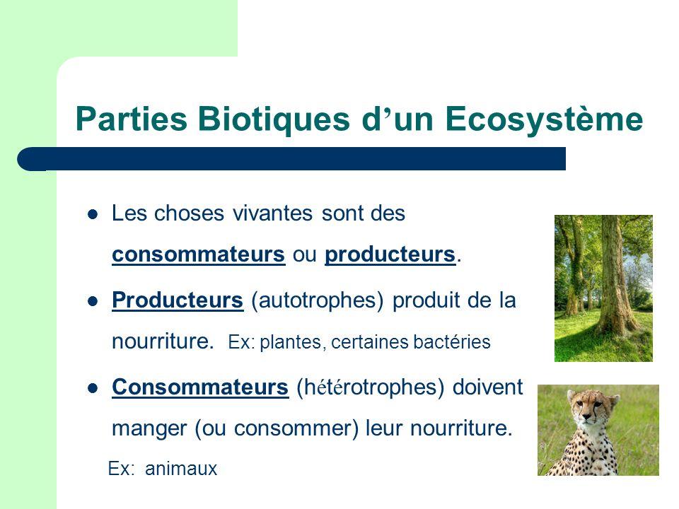 Parties Biotiques d un Ecosystème Les choses vivantes sont des consommateurs ou producteurs. Producteurs (autotrophes) produit de la nourriture. Ex: p