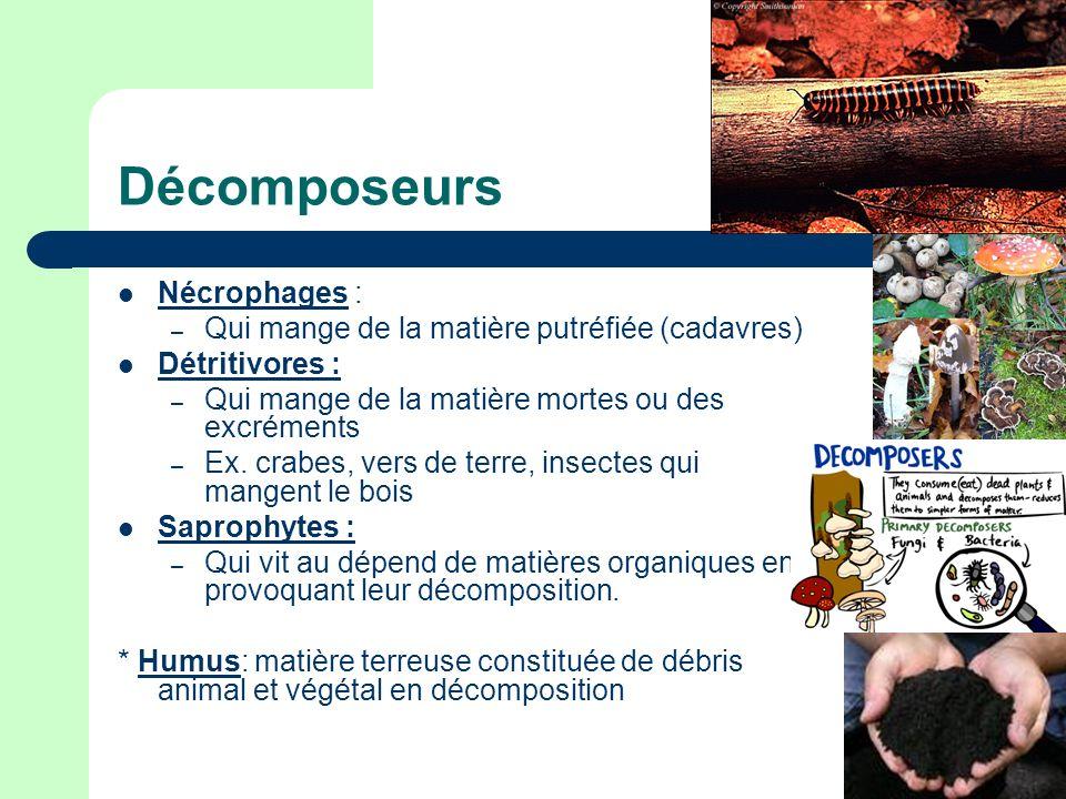 Décomposeurs Nécrophages : – Qui mange de la matière putréfiée (cadavres) Détritivores : – Qui mange de la matière mortes ou des excréments – Ex.