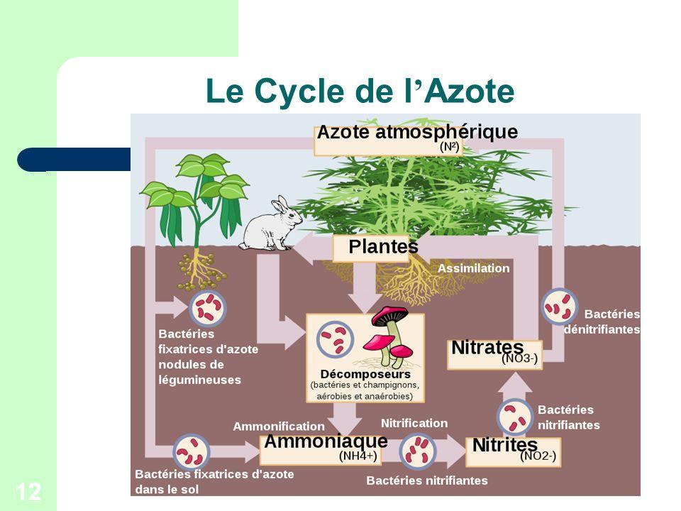 12 Le Cycle de l Azote