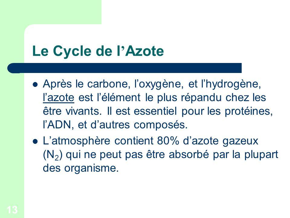 13 Le Cycle de l Azote Après le carbone, loxygène, et lhydrogène, lazote est lélément le plus répandu chez les être vivants. Il est essentiel pour les