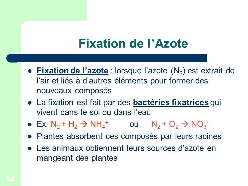 14 Fixation de l Azote Fixation de lazote : lorsque lazote (N 2 ) est extrait de lair et liés à dautres éléments pour former des nouveaux composés La