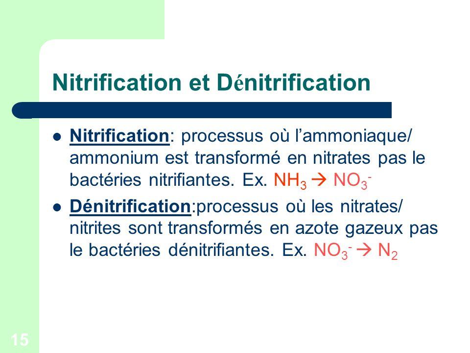 15 Nitrification et D é nitrification Nitrification: processus où lammoniaque/ ammonium est transformé en nitrates pas le bactéries nitrifiantes. Ex.