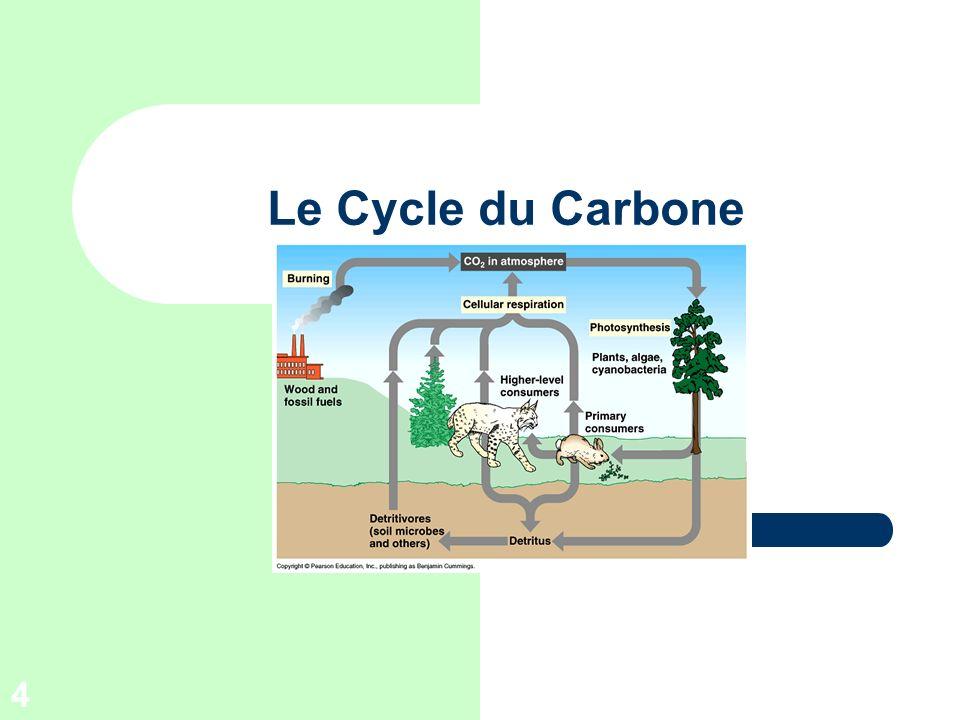 4 Le Cycle du Carbone