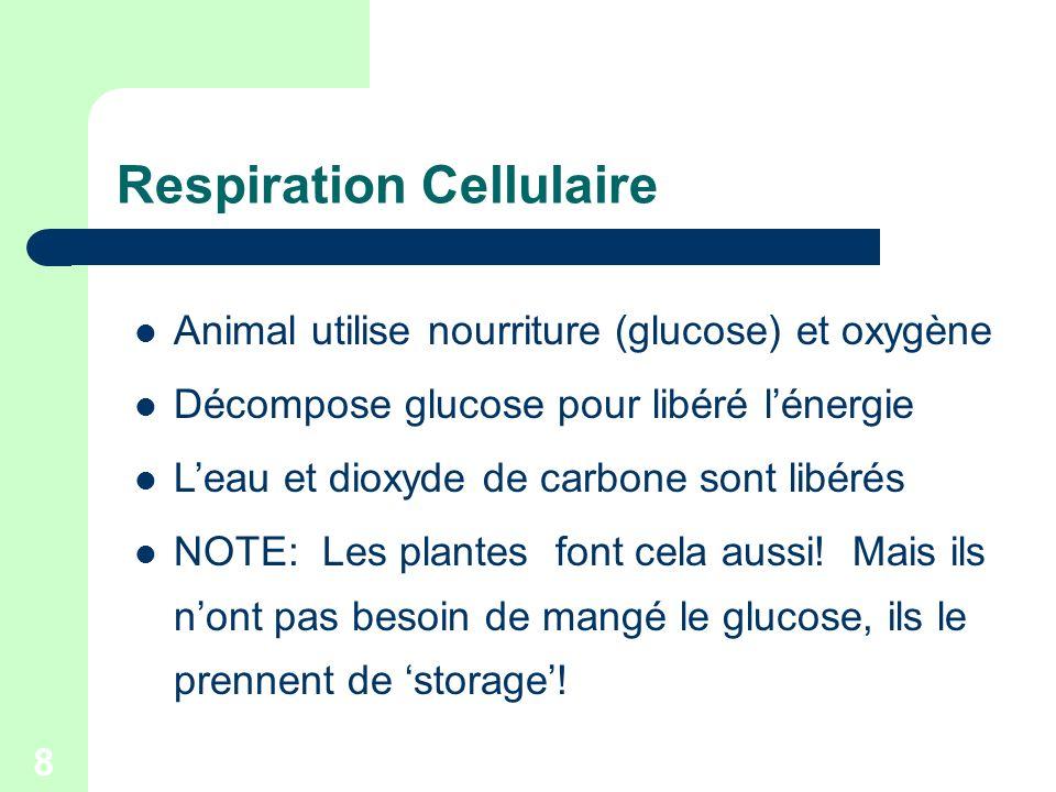 8 Respiration Cellulaire Animal utilise nourriture (glucose) et oxygène Décompose glucose pour libéré lénergie Leau et dioxyde de carbone sont libérés