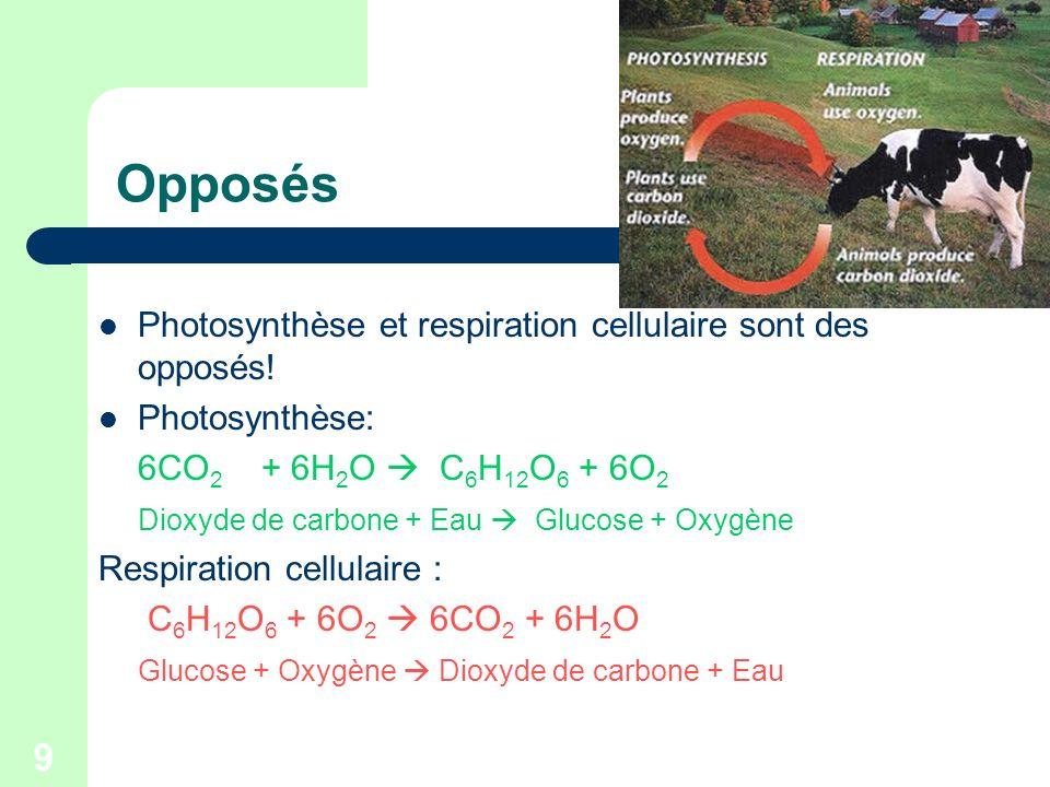9 Opposés Photosynthèse et respiration cellulaire sont des opposés! Photosynthèse: 6CO 2 + 6H 2 O C 6 H 12 O 6 + 6O 2 Dioxyde de carbone + Eau Glucose