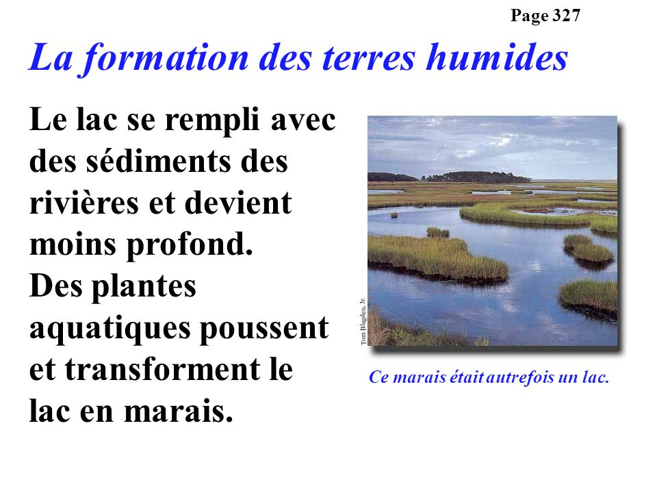 Le lac se rempli avec des sédiments des rivières et devient moins profond. Des plantes aquatiques poussent et transforment le lac en marais. Page 327