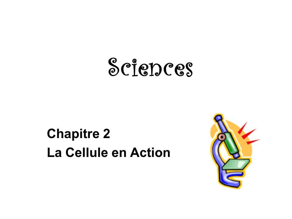 Sciences Chapitre 2 La Cellule en Action