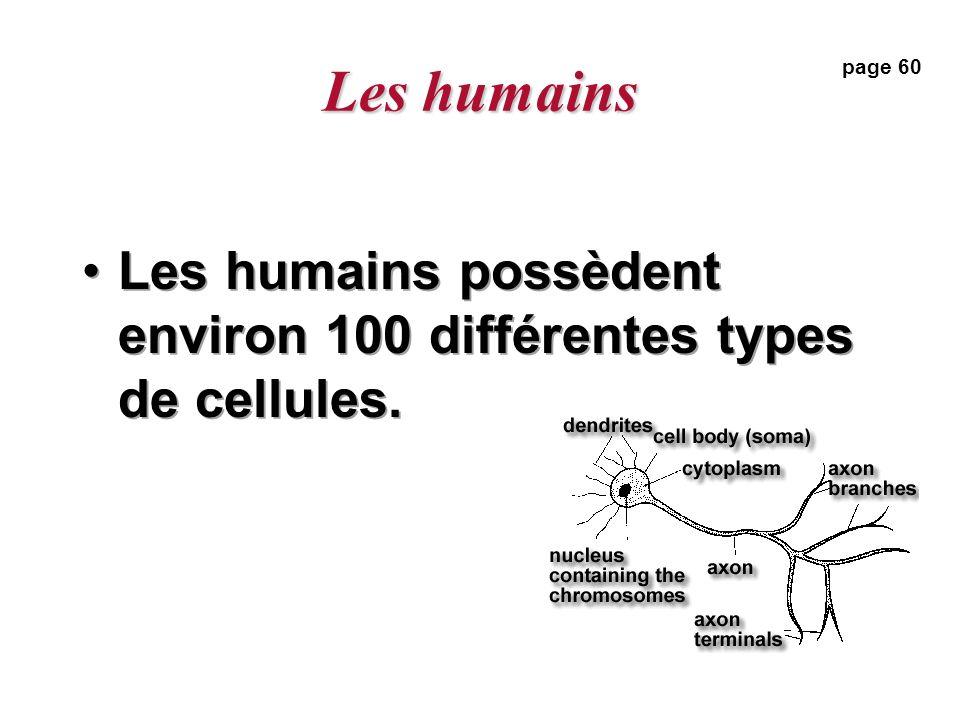 Les humains Les humains possèdent environ 100 différentes types de cellules. page 60
