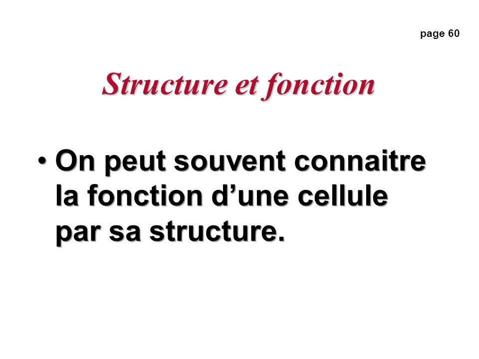 Structure et fonction On peut souvent connaitre la fonction dune cellule par sa structure. page 60