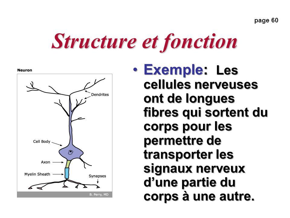 Structure et fonction Exemple: Les cellules nerveuses ont de longues fibres qui sortent du corps pour les permettre de transporter les signaux nerveux dune partie du corps à une autre.