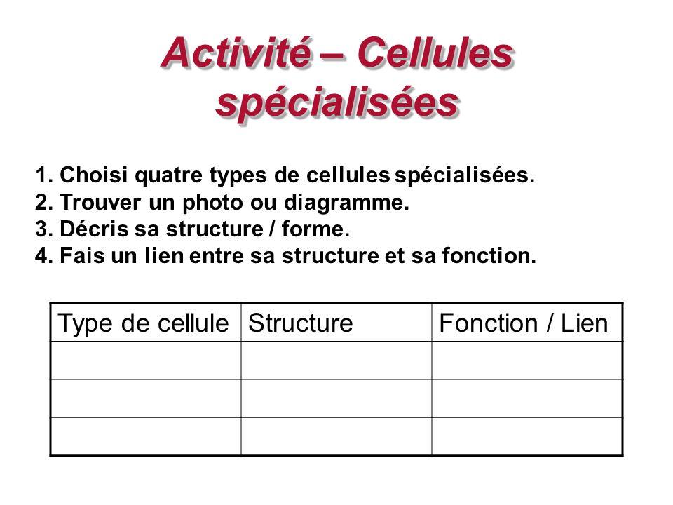 Activité – Cellules spécialisées 1. Choisi quatre types de cellules spécialisées. 2. Trouver un photo ou diagramme. 3. Décris sa structure / forme. 4.