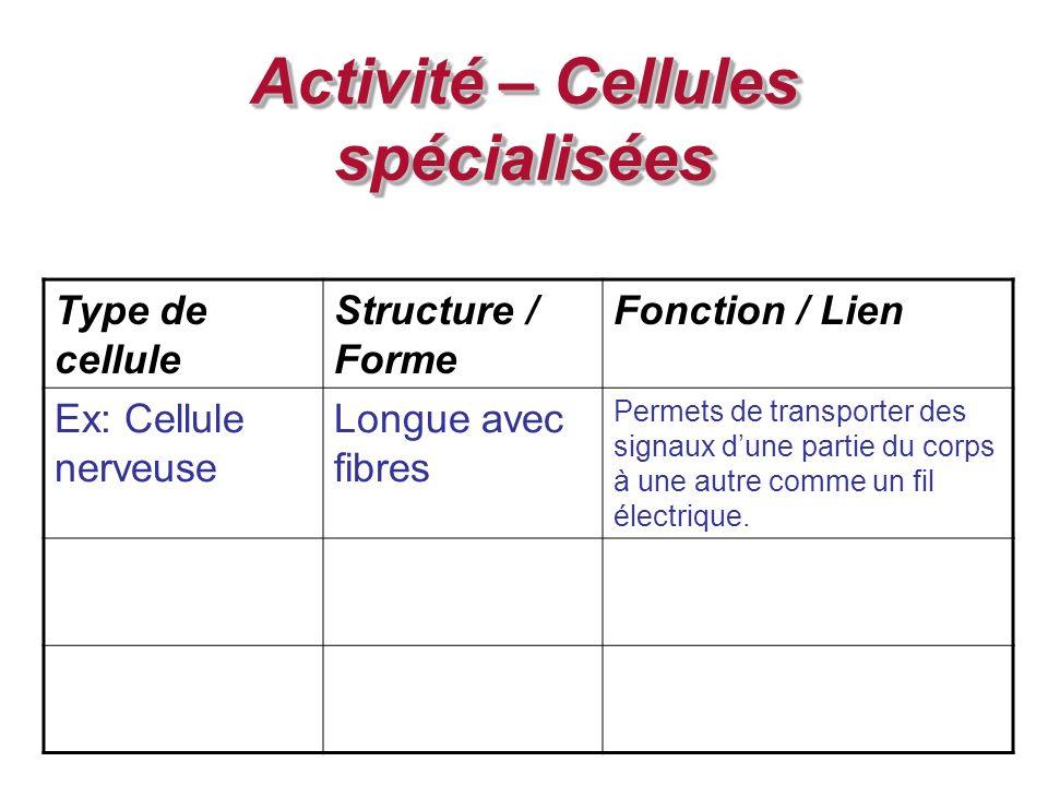 Activité – Cellules spécialisées Type de cellule Structure / Forme Fonction / Lien Ex: Cellule nerveuse Longue avec fibres Permets de transporter des signaux dune partie du corps à une autre comme un fil électrique.