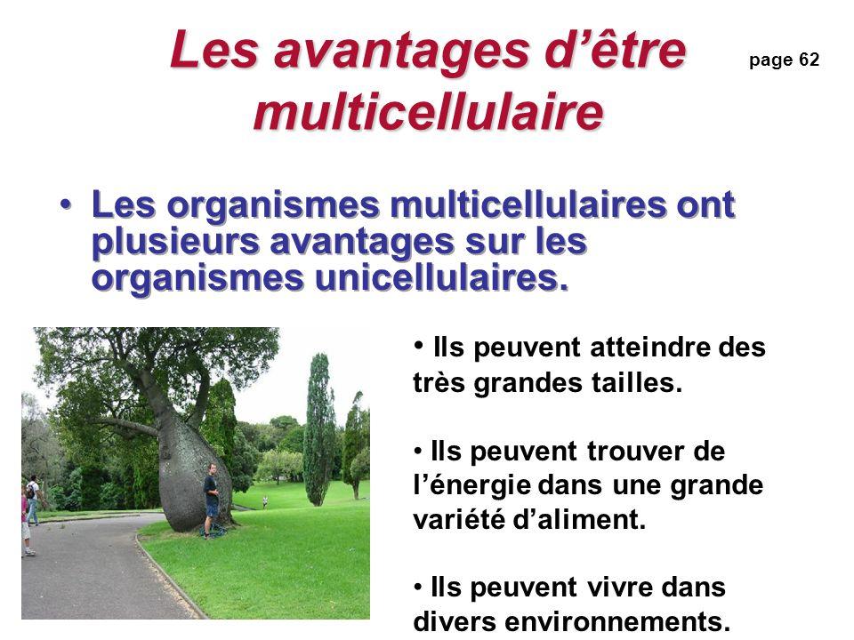 Les avantages dêtre multicellulaire Les organismes multicellulaires ont plusieurs avantages sur les organismes unicellulaires.