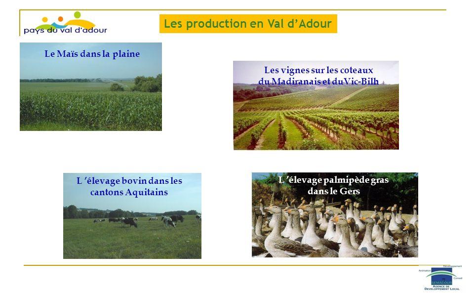 Le Maïs dans la plaine Les vignes sur les coteaux du Madiranais et duVic-Bilh L élevage bovin dans les cantons Aquitains L élevage palmipède gras dans