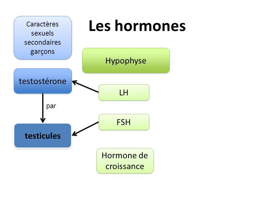 Les hormones Hypophyse LH FSH Hormone de croissance testostérone testicules par Caractères sexuels secondaires garçons