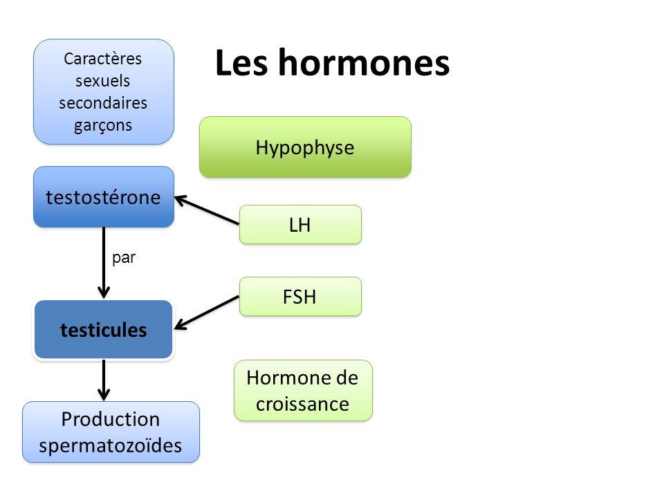 Les hormones Hypophyse LH FSH Hormone de croissance testostérone testicules Production spermatozoïdes par Caractères sexuels secondaires garçons