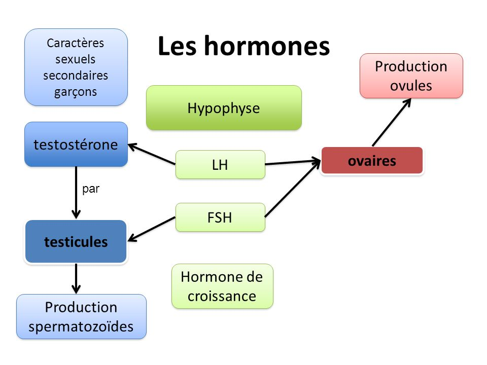 Les hormones Hypophyse LH FSH Hormone de croissance testostérone testicules Production spermatozoïdes par Caractères sexuels secondaires garçons ovair