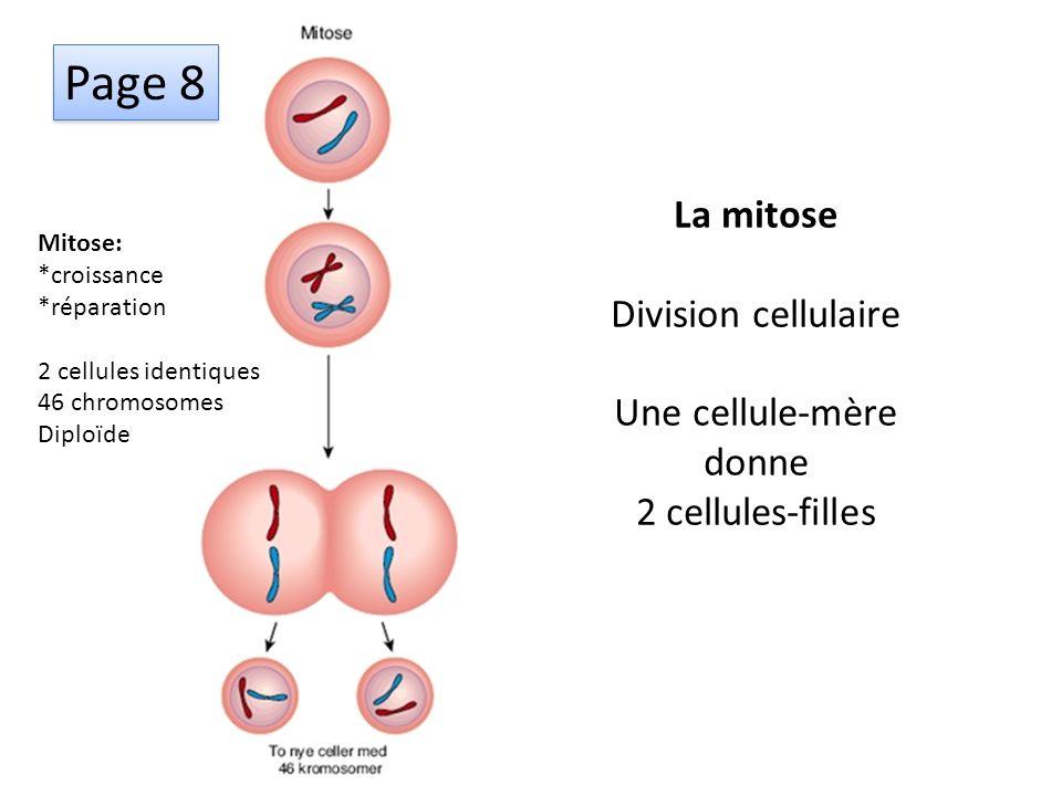 Mitose: *croissance *réparation 2 cellules identiques 46 chromosomes Diploïde Méïose: *reproduction 4 cellules filles 23 chromosomes Haploïde Enjambem