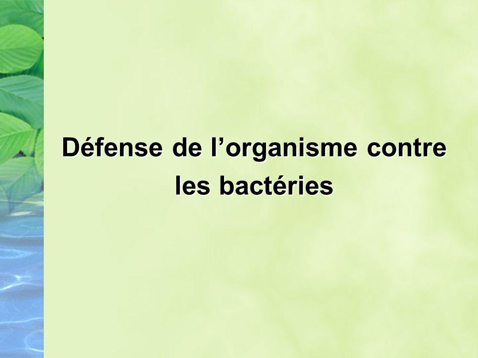Défense de lorganisme contre les bactéries