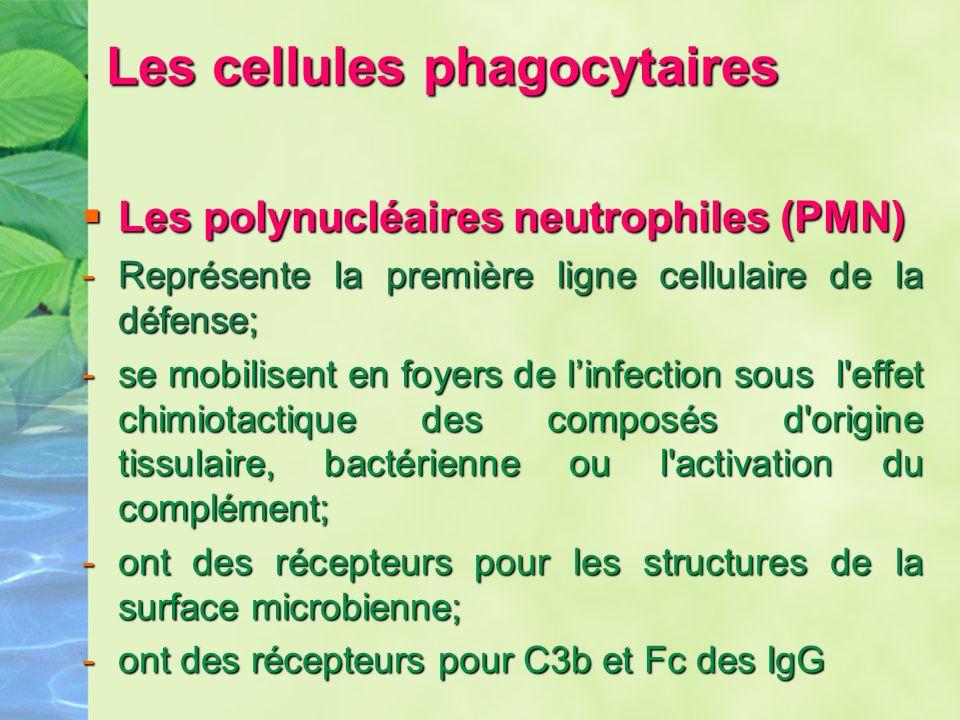 Les cellules phagocytaires Les cellules phagocytaires Les polynucléaires neutrophiles (PMN) Les polynucléaires neutrophiles (PMN) -Représente la premi