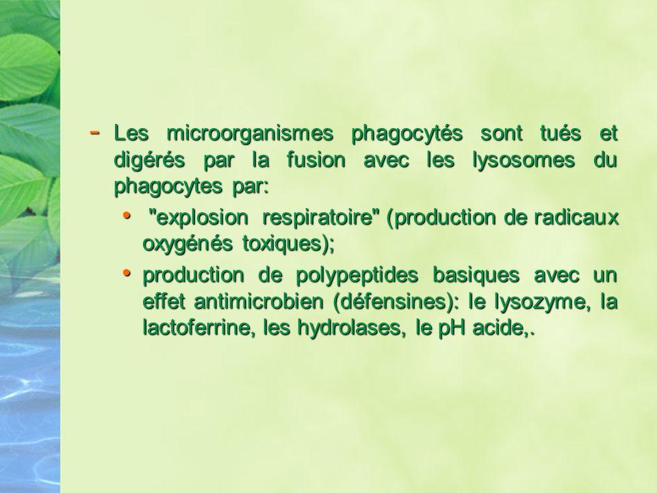- Les microorganismes phagocytés sont tués et digérés par la fusion avec les lysosomes du phagocytes par: