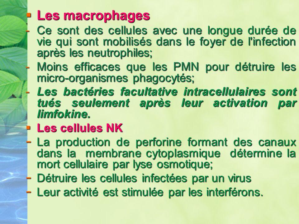 Les macrophages Les macrophages -Ce sont des cellules avec une longue durée de viequi sont mobilisés dans le foyer de l'infection après les neutrophil