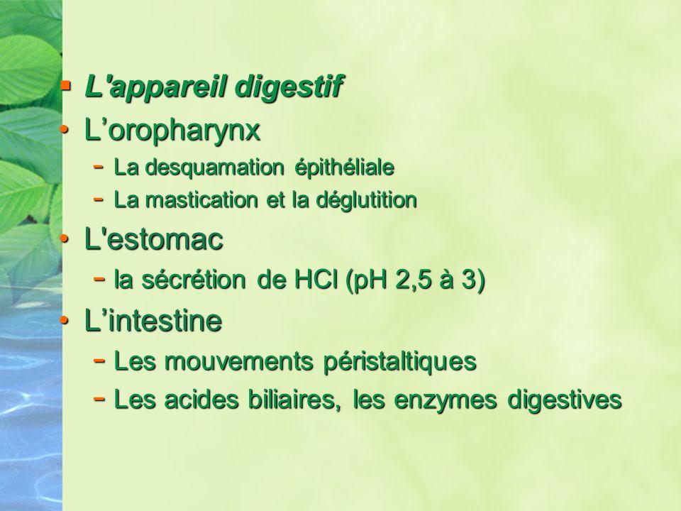 L'appareil digestif L'appareil digestif LoropharynxLoropharynx - La desquamation épithéliale - La mastication et la déglutition L'estomacL'estomac - l