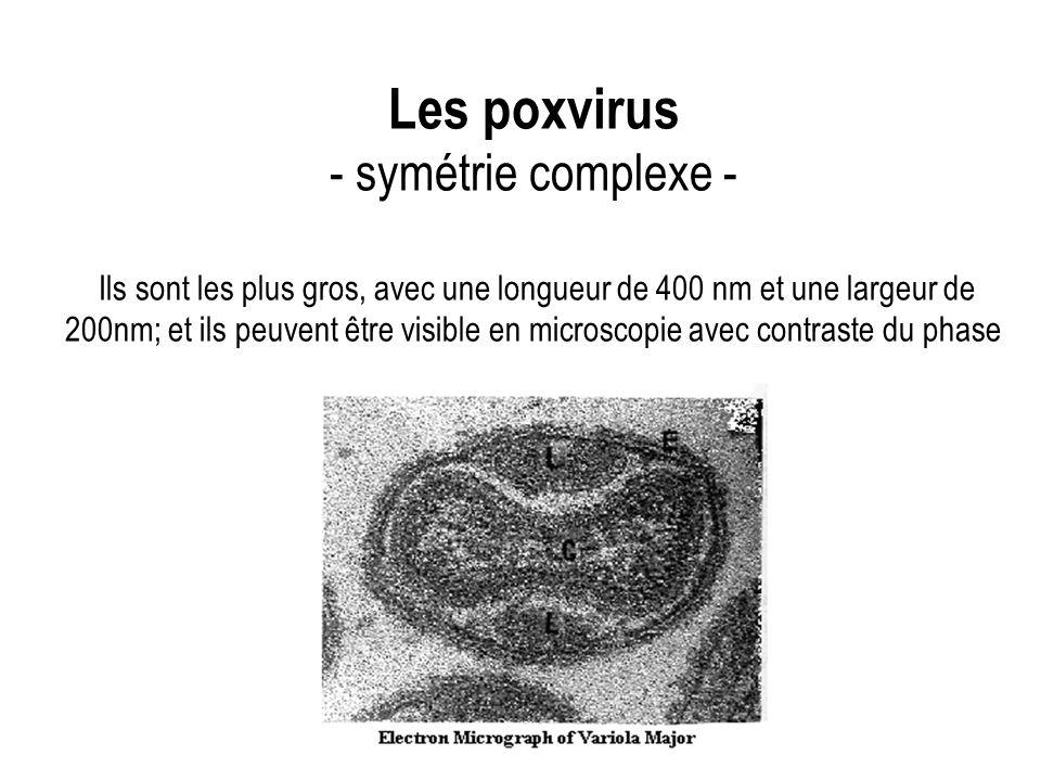 Les poxvirus - symétrie complexe - Ils sont les plus gros, avec une longueur de 400 nm et une largeur de 200nm; et ils peuvent être visible en microsc