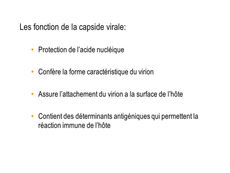 Les fonction de la capside virale: Protection de lacide nucléique Confère la forme caractéristique du virion Assure lattachement du virion a la surfac