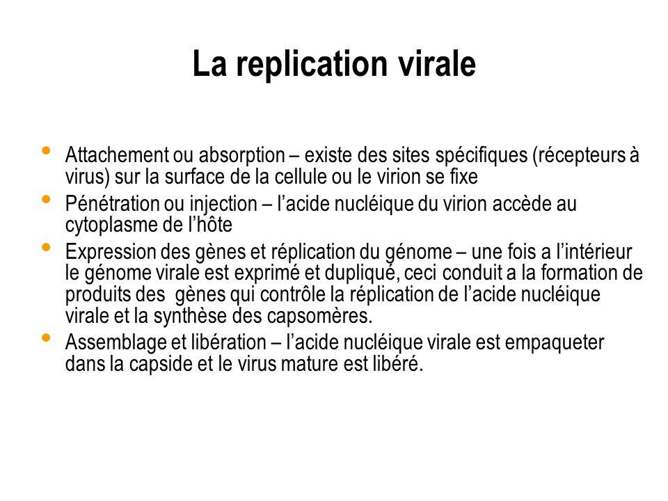 La replication virale Attachement ou absorption – existe des sites spécifiques (récepteurs à virus) sur la surface de la cellule ou le virion se fixe
