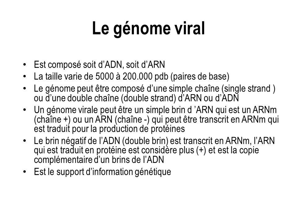 Le génome viral Est composé soit dADN, soit dARN La taille varie de 5000 à 200.000 pdb (paires de base) Le génome peut être composé dune simple chaîne